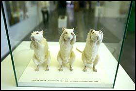 """Utstoppede rotter: """"Jeg har ikke sagt noe, sett noe eller hørt noe."""" Morten Viskums bidrag til høstutstillingen er tre hvite utstoppede rotter som holder """"hendene"""" for munnen, øynene og ørene."""